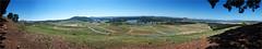 Arboretum Pano 8000 pxls (caralan393) Tags: panorama arboretum canberra