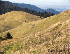 View from Mt. Tam (katejbrown) Tags: blue trees green nature grass tan hills muirwoods bayarea mttam marincounty stinsonbeach apsclens katejbrown