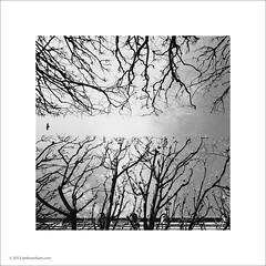 Jardin du Palais Royal (Ian Bramham) Tags: trees paris garden pigeon jardin palaisroyal regimented ianbramham parisxmas2013a