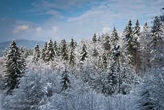 osvetjena drevesa (gregork.) Tags: blue houses winter sky panorama house snow mountains tree forest landscape hill slovenia slovenija zima could gora februar selo sneg vodice landsscape hrib panoramio gozd drevo 2013 hladno hiša rašica