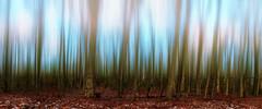 Treeeees