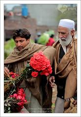 Flower Seller (hellosheraz) Tags: flowers winter pakistan roses rose canon beard 50mm bokeh cap buy 18 sell selling lahore buying 50mm18 600d chadar hellosheraz
