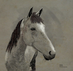 cheval 2013 (behemothmedia) Tags: horse illustration cheval drawing