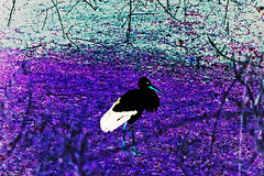 Disguised Stork (psychedelic world) Tags: blue feathers masked mannheim stork disguised storch luisenpark maskiert psychedelicworld