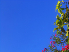 252. When You Love (Le Dsir De La Couronne) Tags: blue sky plant flower beautiful beautifulshot beautyofnature