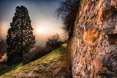 Roman Hillside Vineyard and a Giant Sequoia (alpenbild.de) Tags: sunset sun tree nature wall landscape deutschland evening abend nikon sonnenuntergang natur meadow wiese landschaft sonne baum hdr schriesheim mauer d800 odenwald badenwrttemberg   nikhdrefexpro d800e nikond800e alpenbildde
