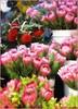 Protea, Florists, Cape Town (robin denton) Tags: flowers flower southafrica flora capetown protea flore nationalsymbol floralappreciation