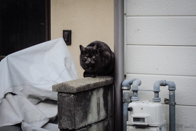 Today's Cat@2013-03-16