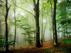 BeyondTheNight (BphotoR) Tags: autumn light oktober fog forest germany deutschland woods october day nebel hessen herbst explore wald herbstwald odenwald bergstrasse supershot abigfave juhhe anawesomeshot forestofodes canonpowershotg10 coth5 bphotor blinkagain kurtpeiserexcellence