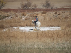 E and Silver on the salt flat (lostinfog) Tags: horse silver colorado walk e30 2012 201211 riderem
