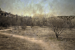 Scrubland (Eric Vondy) Tags: arizona grass dry pale trail mesquite yavapai pagesprings
