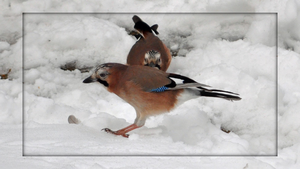 17b6e1fb472 The World's Best Photos of jay and jump - Flickr Hive Mind