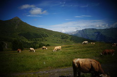Alpine Meadows (Klub Hortensja) Tags: mountains alps switzerland cow milka alpinemeadows kleinescheidegg