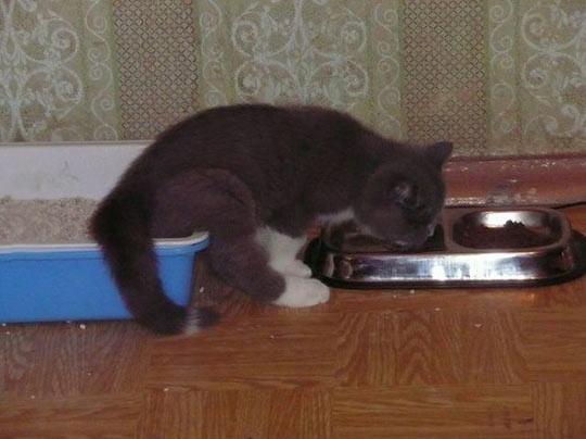 gato_multitarea