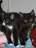 "Pet of the Week: Kittens, Kittens, Kittens! • <a style=""font-size:0.8em;"" href=""http://www.flickr.com/photos/42888877@N06/8603013286/"" target=""_blank"">View on Flickr</a>"