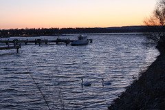 Swans in Harbour (prestonciere) Tags: day93 day93365 3652013 365the2013edition 03apr13