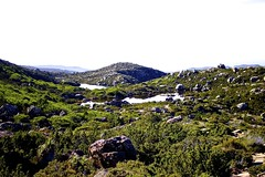 The shelf (stephanie.young1984) Tags: trees landscape nationalpark russell falls alpine tasmania wilderness tarn glaciallake nothofagus mtfield