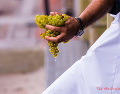 Mendoza-11 Mar 2013 (Ted's photos for you) Tags: travel vacation argentina hand winery mendoza grapes bodega whites waterdrops dripping handful greengrapes mendozaargentina bodegaslopez tedsphotos
