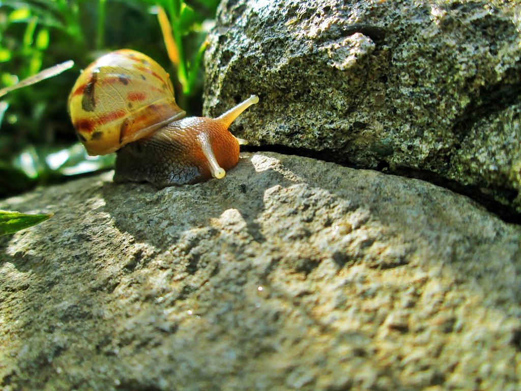Hewan Gastropoda