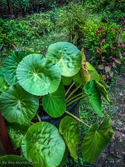 IMG_8890-8 (Reynaldo Mondragon) Tags: flowers gomez farias selvatic vegetation reymondragon
