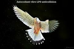 ~~Auto collant vitres LPO anti collision pour oiseaux du ciel~~ (Jolisa) Tags: autocollant vitres rapace oiseaux bird juillet2016