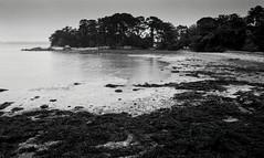 Golfe du Morbihan, B&W, 16 (Patrick.Raymond (2M views)) Tags: bretagne morbihan golge berder littoral mer plage argentique nikon tmax expressyourself