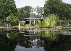 DSC02489_ep (Eric.Parker) Tags: august 2016 rbg royalbotanicalgardens burlington lily lilypad lotus pond flower teahouse