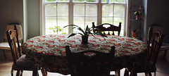 (Mary Jo.) Tags: table kitchen diningroom window lights chairs plant