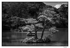 JATI201510_67R_FLK-BYN (Valentin Andres) Tags: bw blackwhite blancoynegro byn japan japon kinkakuji kioto kyoto arbol estanque pond temple templo