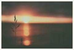 (Frank S. Schwabe) Tags: planart1450 ze zeiss sunset straw midnightsun kristiansund karihola