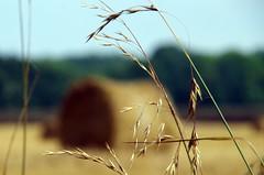 manchmal verschwindet das Groe hinter dem Kleinen (Knarfs1) Tags: stroh ballen strohballen ernte sommer feld getreide corn
