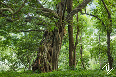 silent valley national park (Vishnu T Suresh) Tags: varadimala melthottam silent valley national park kerala tourisum elephant fog mist estate india agali aanakkatti palakkad green forest malayala manorama silentvalley