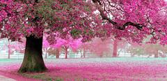 pink (beddinginnreviews) Tags: beddinginnreviews fashion reviewsbeddinginn woman style beautiful comfortable