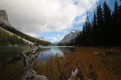 Elbow Lake Kananaskis Alberta Canada (davebloggs007) Tags: elbow lake kananaskis alberta canada september 18th 2016 tree stump mountains rockies g o me