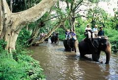 Elephant+Safari+Chiang+Mai (dasiatravels) Tags: chiang mai tour chiangmai musli halal meals muslim holiday