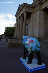 22.9.16 Elephants in Sheffield 137 (donald judge) Tags: sheffield herd of elephants chldrens hospital charity