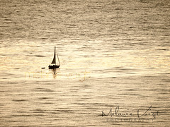 . (Melanie Voigt) Tags: ocean california water sailboat point boat san diego olympus calm sail loma photoography e410