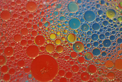 Olive oil and water (Tony Dias 7) Tags: colour macro water droplets drops small olive round refraction oil