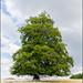 Lonely tree | Transylvania - Romania