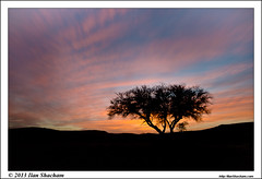 Acacia Sunset 2 (Ilan Shacham) Tags: longexposure sunset sky tree silhouette clouds israel movement colorful desert dusk le lone glowing negev acacia עץ שמיים נגב שיטה בודד צניפים znifim