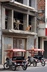 Construction Dog (cowyeow) Tags: street travel dog cute dogs peru latinamerica southamerica weird town construction funny funnydog iquitos buidling peruvian