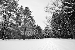 Cold Winter Morning at Emery Park (DTA_2935) (masinka) Tags: park morning trees winter blackandwhite bw white snow ski nature monochrome southwales season outdoors buffalo path walk earlymorning footprints hike crosscountry trail emery eastaurora buffaloniagara emerypark