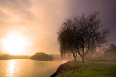 Weeping....... (Chrisconphoto) Tags: uk trees mist water fog landscape dawn sthelens contrejour merseyside goodlight intothelight