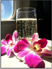 Cheers... (scrapping61) Tags: stilllife feast inflight orchids champagne legacy alaskaairlines tistheseason masterclass swp vividimagination 2013 forgottentreasures artdigital scrapping61 sharingart awardtree daarklands trolledproud exoticimage pinnaclephotography netartii