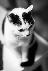 il Micio (Matteo Crema) Tags: pet animal cat felino gatto animale micio
