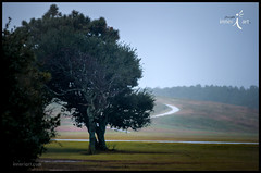 Wind with the Wright Brothers (inneriart) Tags: usa storm wet rain photography coast utah dangerous artist wind unique hurricane fineart north creative documentary saltlakecity american carolina poweroutage emergency outerbanks journalism kittyhawk eastcoast freelance killdevilhills unitedstateofamerica superstorm inneri hannahgalliinneri nikond300s photoshopcs5 inneriart innereyeart inneri wholehannah hurricanesandy inneriartcom