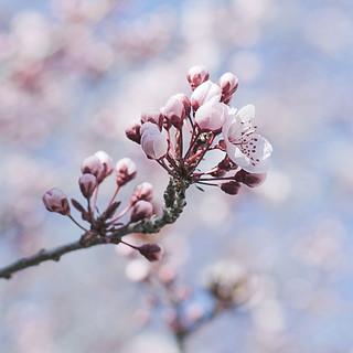 brotes de primavera ¡¡explore!!