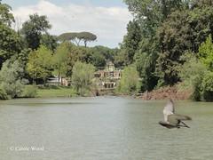 Villa Doria Pamphili - Viale Otto Marzo Festa della Donna - Lago 04 (Fontaines de Rome) Tags: roma rome