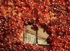 Window in autumn. (Mr.Grijander +600.000 views) Tags: madrid street autumn window leaves reflections hojas ventana otoo calles reflejos blinkagain