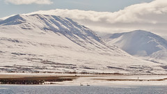 Almost spring ? (joningic) Tags: winter sea bird ice nature birds river iceland earth swans akureyri eyjafjrur eyjafjararsveit eyjafjarar